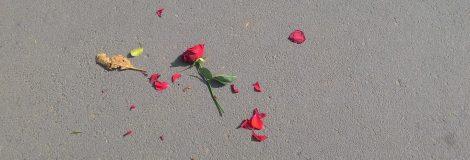 rose-640443_1920